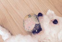 CongChar / My dog
