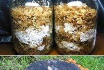 Выращиваем грибы сами