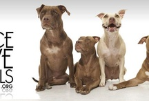 All Things Pitty - Save The Pitbulls