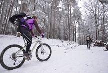 Pfalz im Winter
