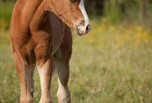 Horses ~