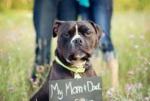 Pets in Weddings / Ideas and ways to include pets in your wedding planning and wedding ceremony, from dogs to cats.