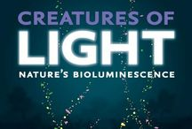 Creatures of Light: Nature's Bioluminescence / Thu Mar 7, 2013   -   Sun Sep 8, 2013 / by Field Museum Stores
