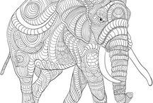 animal colouring pages