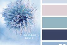 House - Colour Schemes
