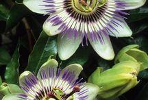 What a beauty! It's a wonderful flower.