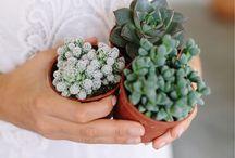Krukväxter / Blommor