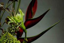 Botanical Sculptures
