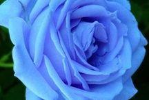 Blue / Blue blue blue