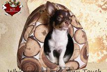 WLTT Dogfashion / Hundemode Hundebetten Hundekissen Hundedecken handmade