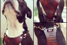 Dog Harnesses / A collection of dog harnesses