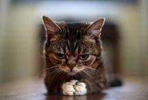 Kitties / by Tashia Johnson