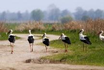 Polska,Świat,przyroda,krajobrazy,miejsca,piękno