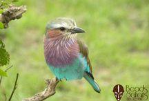 Kenya Birds - Beads Africa