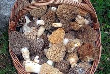 Spring recipes and decorating ideas / Morels Asparagus and all that is spring!
