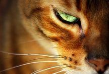 cats / by Oliva Lobel