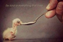Life would not be without animals