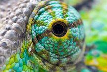 ochi colorați