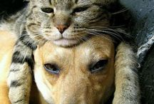 Chats / Chats chiens