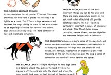Dog training / Dog training tips