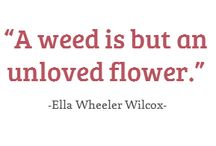 What We Think About Flowers
