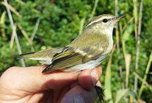 Suivi ornithologique des salins d'Hyères