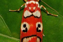 6.2 / insetos