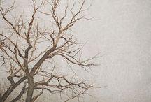 Trær/trees