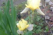 Rośliny / Małe ogródki
