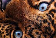 kot kotek kota kotem kotu kocie koty kotami kociaki