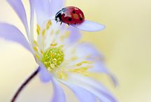 Coccinelle o ladybugs, questi esserini dolcissimi portatori di fortuna