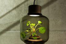 идеи выращивание