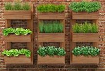Jardim vertical de parede