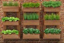 Jardins / Hortas