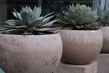 Vasi e piante
