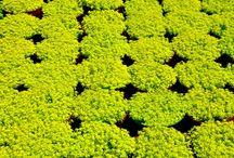 Plants/Shrubs/Herbs