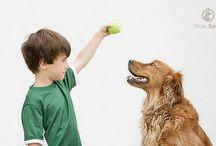 Adestramento / Dicas e técnicas de adestramento de cãezinhos. / de Petite Sofie