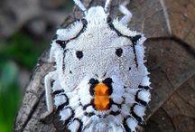 Beetle - Böcekler
