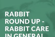 LagoLearn Rabbit CPD / We provide rabbit based continuing professional development (cpd) training to the veterinary profession.