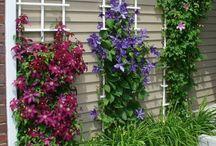 giardino di casa