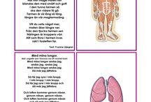 kroppen