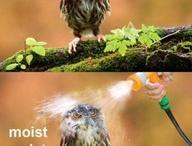 Hilarious things. / by Rachel Swanson