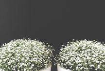 Flower / Plant