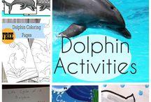 dolphin hapu