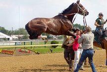 Horse athleticism