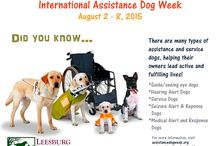 Service and Assistance Animals / Service and assistance animals are hardworking specially trained animals that help people lead active and fulfilling lives.