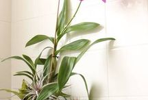 Orkidéer