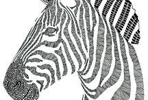 zebra zijaanzicht / kleurplaat
