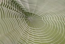 Weave a web of wonder / by Stephanie Gibson