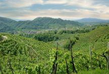 Profumi d'Italia / Profumi d'Italia è un'azienda innovativa, che produce dalle migliori selezioni di Pinot Nero, strepitose bollicine e non solo...
